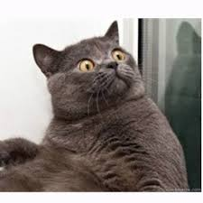 Cat Meme Maker - conspiracy cat meme generator