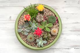 Succulents That Don T Need Light Making A Succulent Plant Container Garden