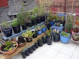 77 best apartment gardening images on pinterest gardening