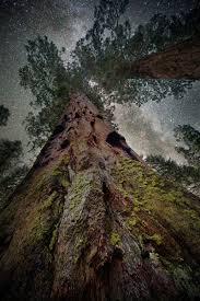 Ancient Origins Of Halloween Breathtaking Photos Of Ancient Trees Against Starry Skies Atlas