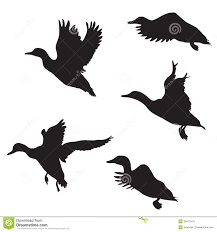 ducks royalty free stock images image 36472479