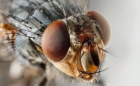 hilfe gegen haushaltsschädlinge vitagate antenne stubenfliege augen insekt tiere hochwertige augen