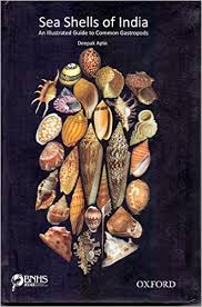 where to buy seashells sea shells of india an illustrated guide to common gastropods