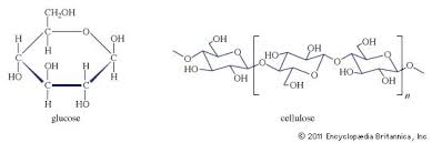 carbohydrate biochemistry britannica com