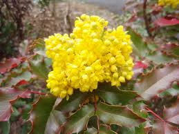 native plants to oregon ten woody native plants every oregonian should know metro