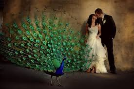peacock wedding celebrate ideas for a peacock themed wedding saffron speak