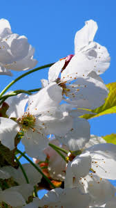 178 best spring images on pinterest nature wallpaper spring and