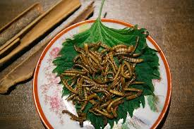 insecte cuisine insectes comestibles verres de farine picture of mumbai cafe