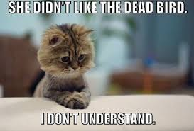 Cat Internet Meme - 22 of the greatest cat memes from across the web