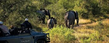 african safari animals african safari packages holidays u0026 tours 340 tours offered