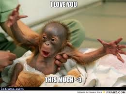 I Love You This Much Meme - i love you meme google search humor pinterest meme and humor