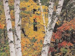 27 best white birch u0026 aspen images on pinterest birches aspen