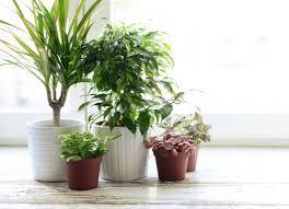 11 ways to save a dying plant bob vila