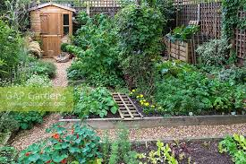 Vegetable Beds Gap Gardens A Town Garden Potager With Raised Vegetable Beds
