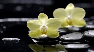 spa images hd spa tag wallpapers page 2 view flowers water relaxation spa