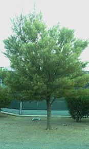 deciduous vs evergreen trees gardening on mars