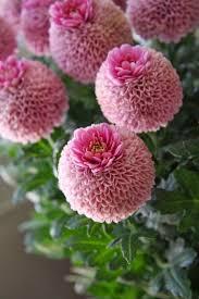 488 best aa cut flower id images on pinterest cut flowers ocean