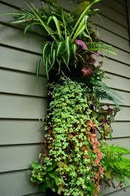 an easy living wall entry garden shawna coronado