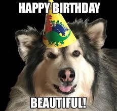 Birthday Dog Meme - happy birthday memes dog wishesgreeting