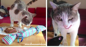 gateau anniversaire animaux le gâteau d u0027anniversaire pour chat allo maman dodo