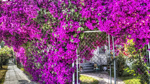 beautiful plants flowers colorful lovely splendor beautiful plants galore paradise