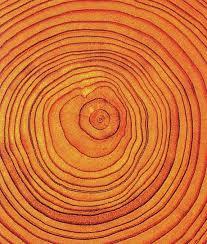 best 25 tree rings ideas on wood print tree print