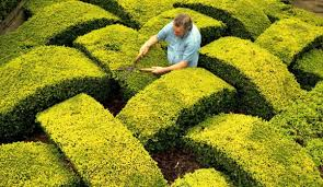 Bushes For Landscaping Where To Buy Bushes Or Other Bushes For Landscaping