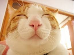 Smiling Cat Meme - list of synonyms and antonyms of the word smiling cats