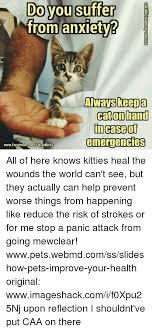Anxiety Cat Memes - 25 best memes about cat cat memes