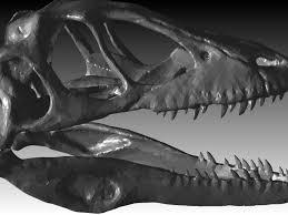 Skull Viewer Real Raptor Skull Stl Autocad 3d Cad Model Grabcad