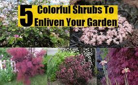 Garden Shrubs Ideas Top 5 Colorful Shrubs To Enliven Your Garden Diy Home