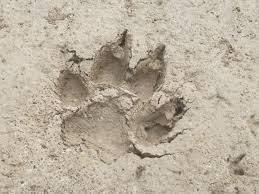 alpa hawks nest pack paw print howling for justice