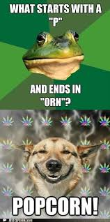 Stoned Dogs Meme - animal capshunz wordplay funny animal pictures with captions