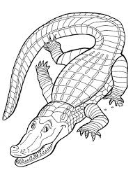 free printable alligator coloring pages kids 5gzkd