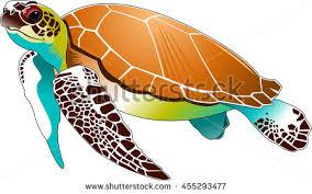 turtle cartoon stock images royalty free images u0026 vectors