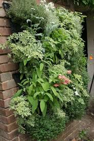 160 best vertical gardens images on pinterest garden gardening