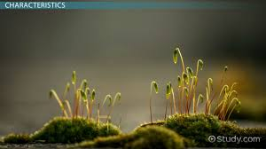 bryophytes definition types characteristics u0026 examples video
