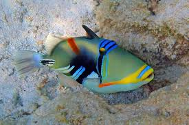 triggerfish archives creations of god