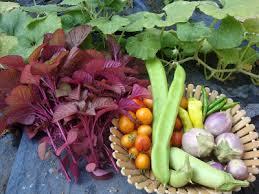 organic micro farm and vegetable terrace garden vegetable garden