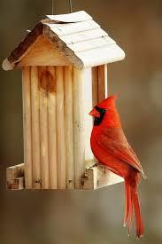 Cardinal Bird Home Decor by The Cardinal Bird Feeder What Works Best Best Bird Feeders