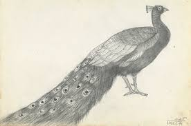 peacock drawing in pencil drawing art gallery