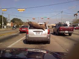 hunting truck dude get a truck deer is hanging from back of pontiac vibe