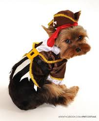 Halloween Costumes Dogs Cutest Puppy Costumes 2011 781 Fantasia Pet Images Fantasy Animals