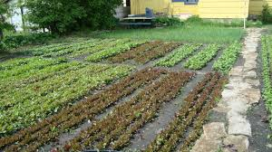 get started with spin farming cornell small farms program