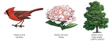 state flower coloring pages arizona state flower coloring page