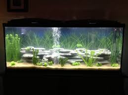 55 gallon aquarium light image result for 55 gallon fish tank 3d background black tank