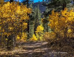 2018 eastern sierra fall colors u2014 bob kent photography