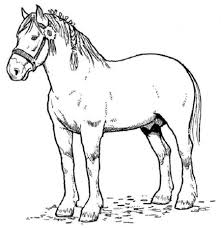 horse coloring page the sun flower pages