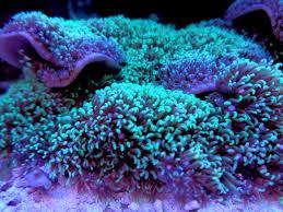 arriere plan du bureau images gratuites texture modèle vert la biologie bureau bleu