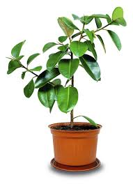 healthy and helpful plants for your home toll talks toll talks